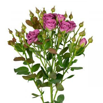 Роза-спрей (веточная)
